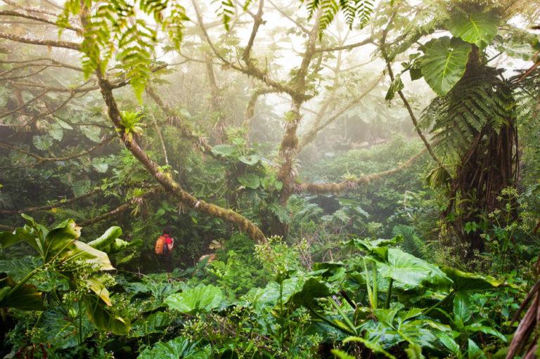 walk-trough-jungle-saba.jpg